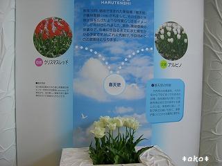 20070518-6春天使1