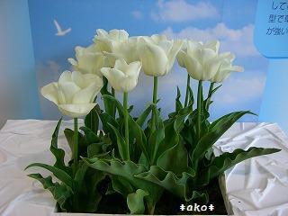 20070518-7春天使2