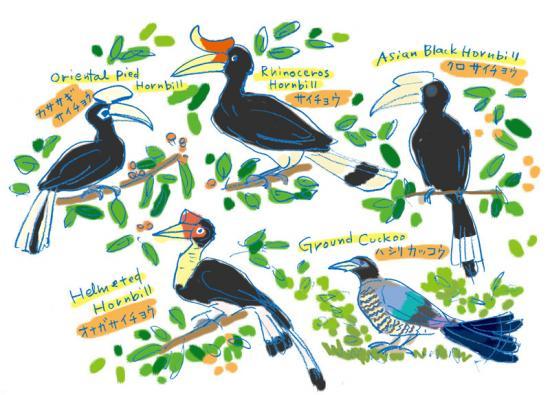 borneo_birds