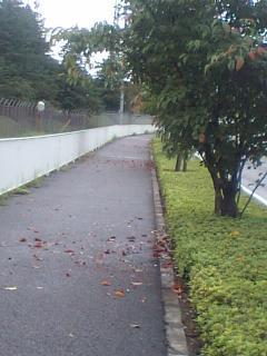 20080920稲城の秋