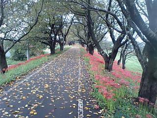 20080930桜堤公園3