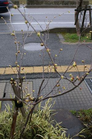 tosamizuki2.jpg