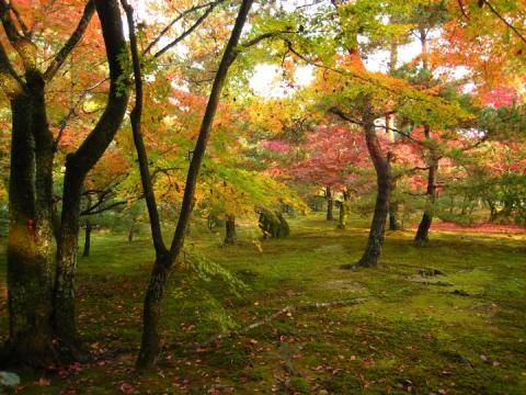 rokuonji_temple_garden.jpg