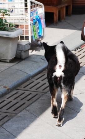 犬は何故お尻の穴を見せて歩くのだろう?
