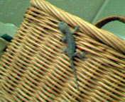 おととし、ヤモちゃんに作ってあげたバスケットのお部屋
