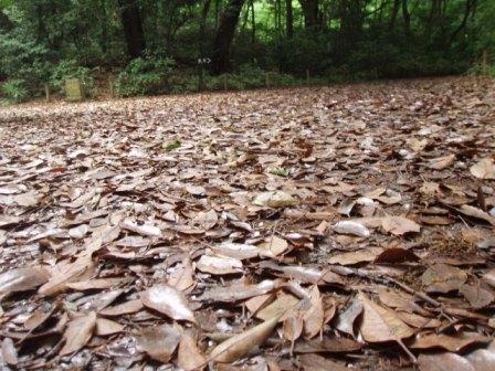 この季節でも遠路には落葉が堆積されています