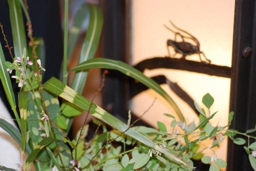 鈴虫とタカノハススキ