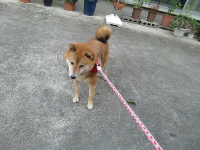 kyohi1104.jpg