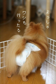 2008060966.jpg