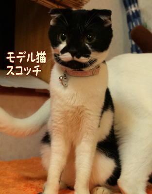 abi46.jpg