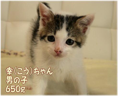 satooya426.jpg