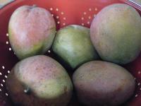 Mango 123