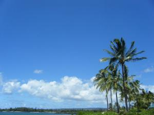haleiwa aliibeach