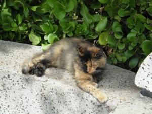 kakaako park cats