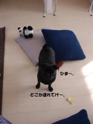 20080311_河川敷1