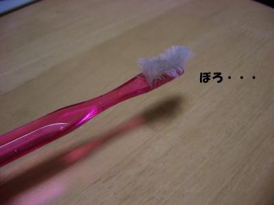 20080313_自由5