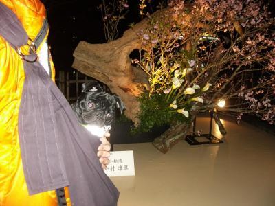 20080315_京都9