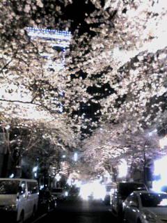 八重洲夜桜