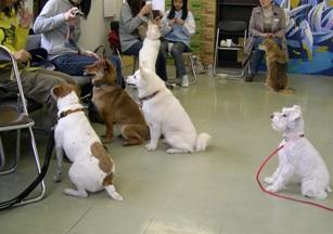 親睦会 犬の集中