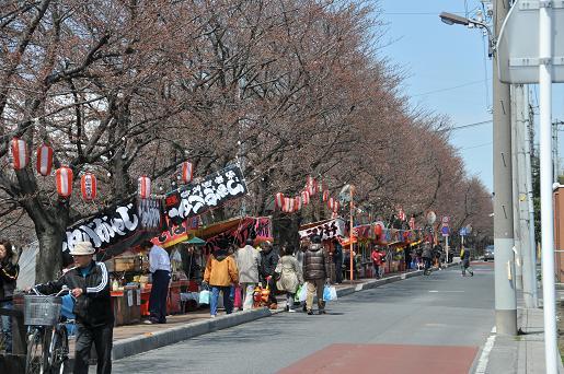 桜並木090329 041