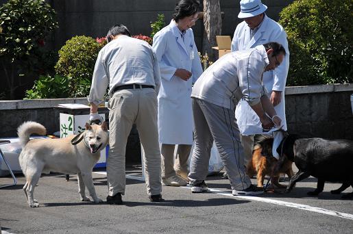 090410 003 狂犬病予防