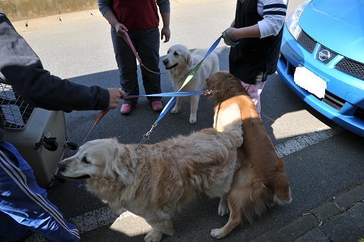 090410 020 狂犬病予防