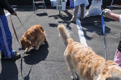 090410 043 狂犬病予防