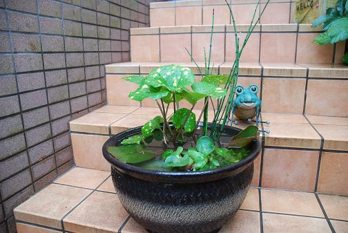 090511 012 水生植物