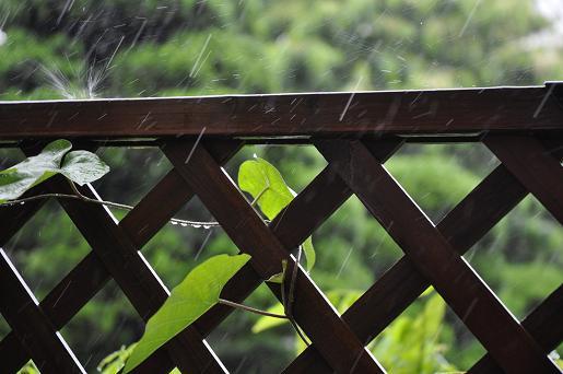 090529 024 雨