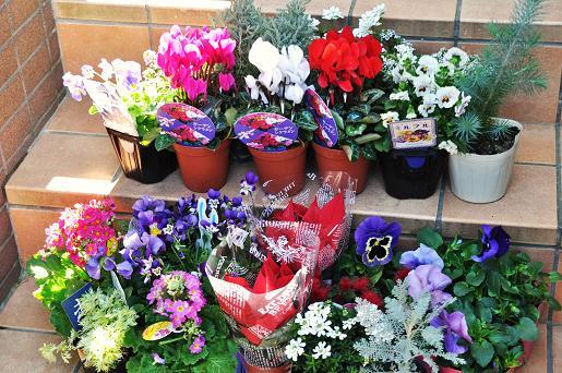 091115 089 お花