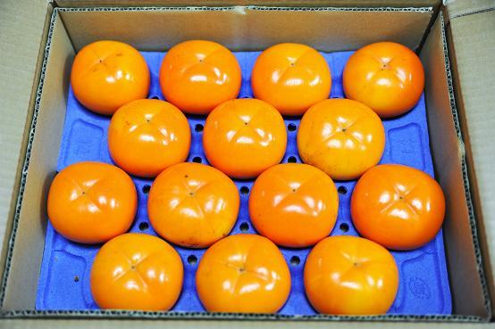 091118 002 柿