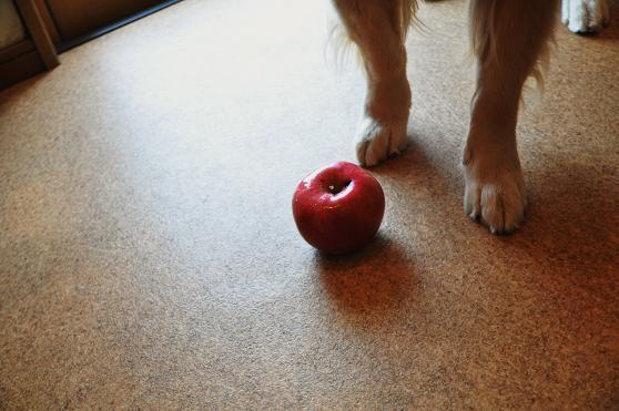 091124 011 ケニたんとリンゴ