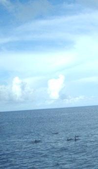 20081116_8.jpg