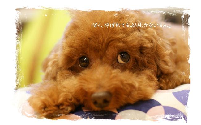 DSC09688-rin.jpg