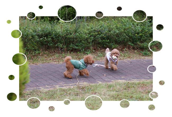 DSC09869-asobu.jpg