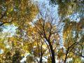 未だ緑の森の一角の黄葉の木立