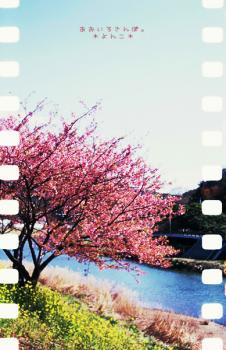 桜の咲く川