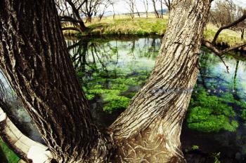 安曇野の水