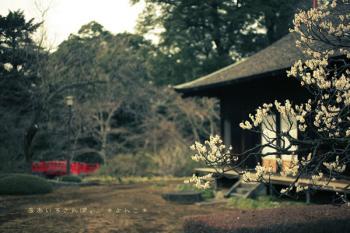 喜多院の庭 ポラロイド風