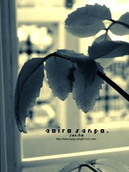窓際のマザーリーフ