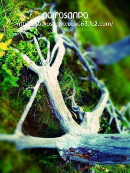 立ち枯れの木