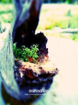 植木鉢の木