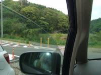 昭和の森 風景