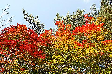 08.10.15白糸の滝の紅葉