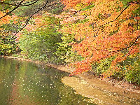 今が盛りの秋元湖畔