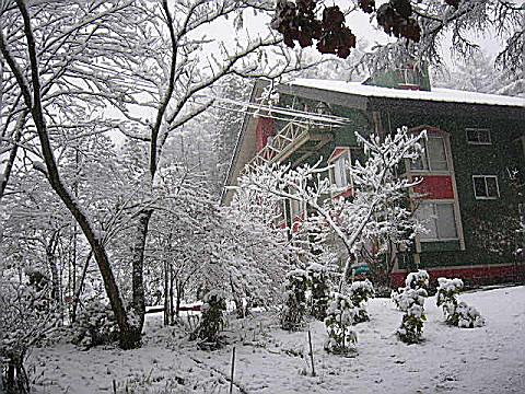 今日、初雪だ~