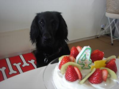 ケーキオクレ