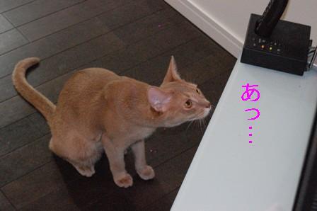 猫むちゅう