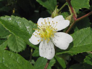 白い木の花s