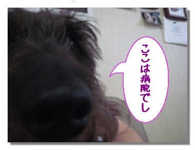 mimi008.jpg